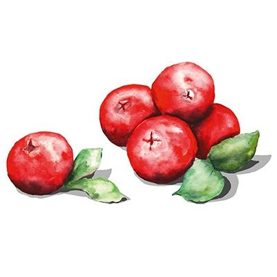 Cranberry Illustration